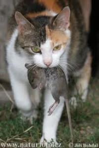 velká kořist a velká kočička